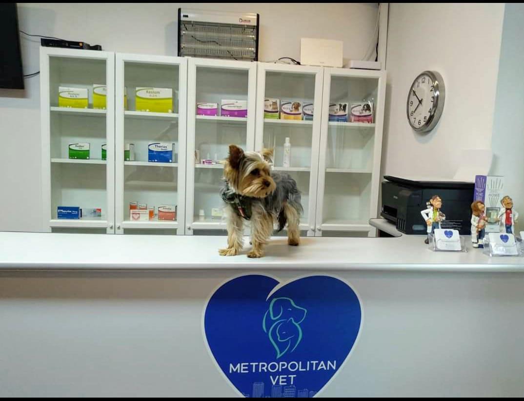 Consultatii puppy si medicina preventiva